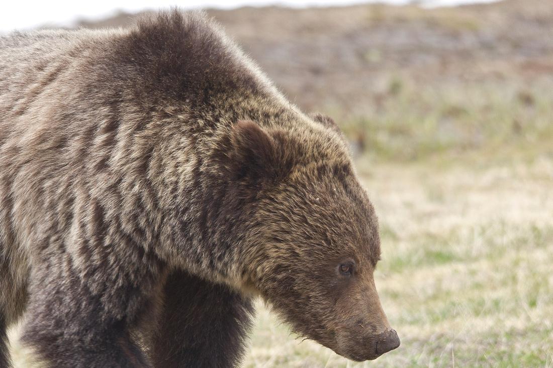 Montana Wildlife Photography
