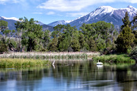 Mountains, creek and a swan